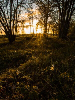 Ekbackar Hultet Solnedgång B 20200507