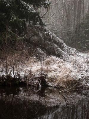 Kanalen Trångfors Gran och Nysnö Hallstahammar 20201130