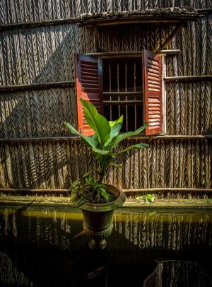 Vietnam Fönster och grön växt vid damm